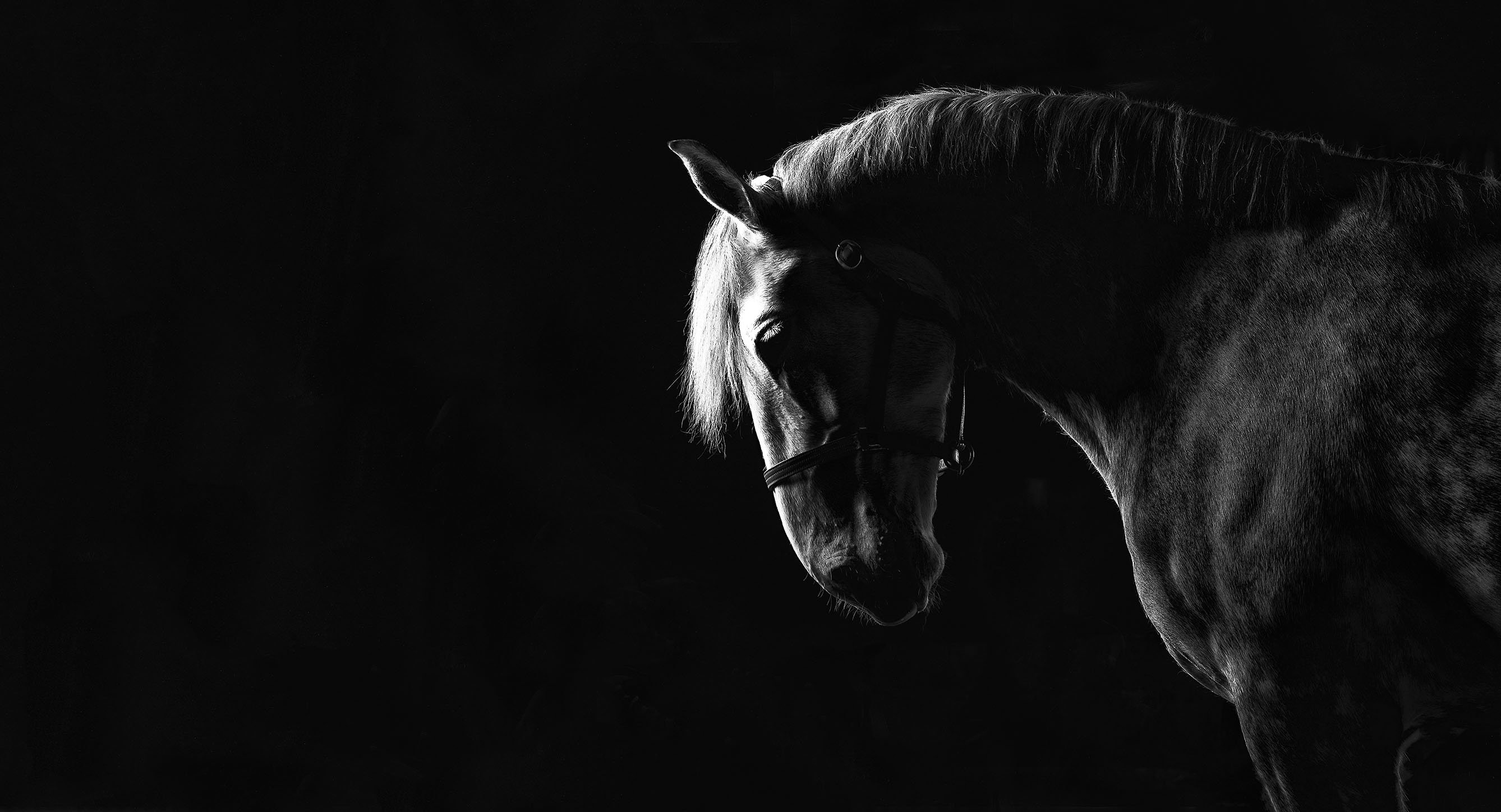 Image from Equus Photography